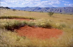 """Fairy rings"" in Namibia"